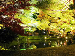 kodaiji garden pond light-up